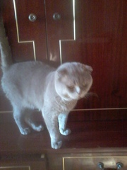 Отдам  вяжущего кота