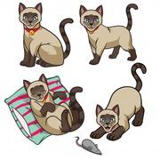 Куплю Сиамского котёнка